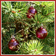 Cranberry Red Crystal Glass Two Inch Ornament Ball (set of 3)